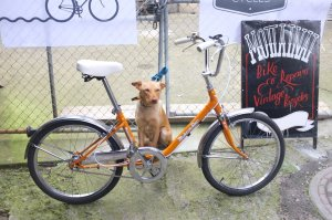 Full restoration including paintjob of this Family Star. Factory fresh and with canine approval, woof!